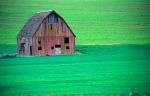 Barn in the Palouse- s.c