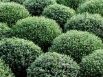 Foliage as Shapes - IMG_0052 s.c